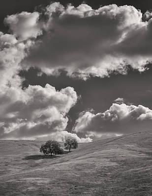 Joseph Smith Photograph - Hillside Trees by Joseph Smith