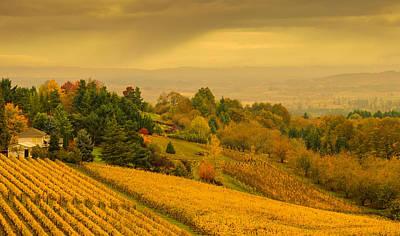 Photograph - Hillside Vineyard by Don Schwartz