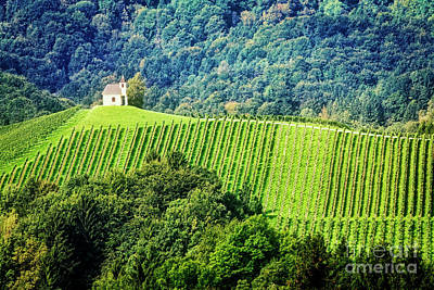 Photograph - Hillside Vineyard  by Scott Kemper