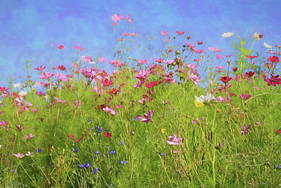 Photograph - Hillside Wildflowers by Donna Kennedy