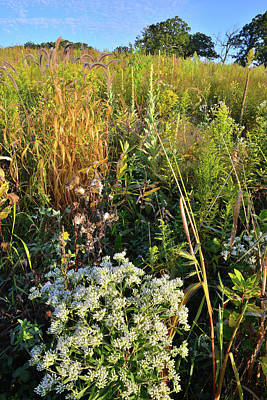 Photograph - Hillside Wildflowers In Glacial Park by Ray Mathis
