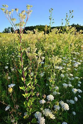 Photograph - Hillside Wildflowers In Marengo Ridge by Ray Mathis