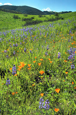 California Photograph - Hillside Wildflowers In Moorpark by Lynn Bauer
