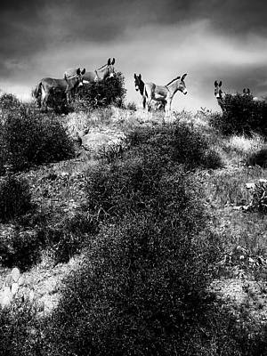 Photograph - Hilltop Burros by Barbara D Richards