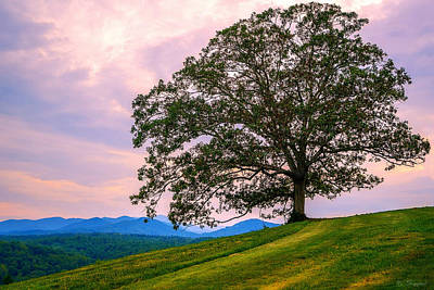 Photograph - Hilltop Oak by Brian Shepard