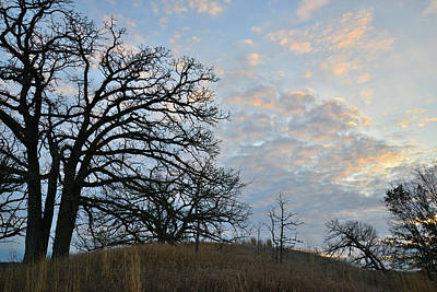 Animal Watercolors Juan Bosco - Hilltop Oak Trees Silhouetted at Sunrise in Glacial Park by Ray Mathis