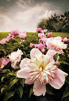 Photograph - Hilltop Peonies by Jessica Jenney