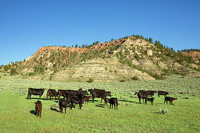 Hilly Pasture Art Print