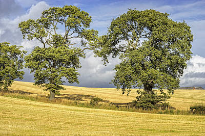 Photograph - Hilton Farm by Jeremy Lavender Photography