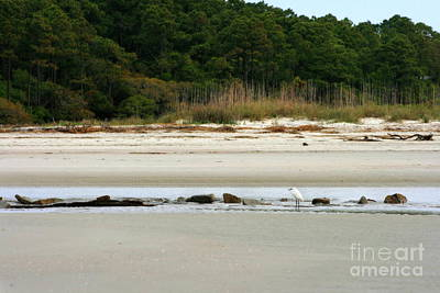 Photograph - Hilton Head Island Shoreline by Angela Rath