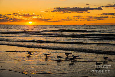 Photograph - Hilton Head Seagulls by Paul Mashburn