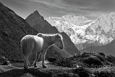 Photograph - Himal Chuli With Horse - Nupri Nepal by Craig Lovell