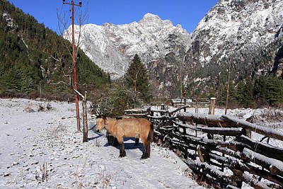 Photograph - Himalayan Horse by Aidan Moran