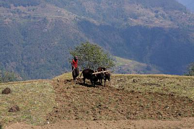 Photograph - Himalayan Ploughman by Aidan Moran