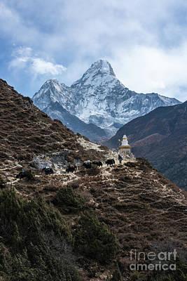 Photograph - Himalayan Yak Train by Mike Reid