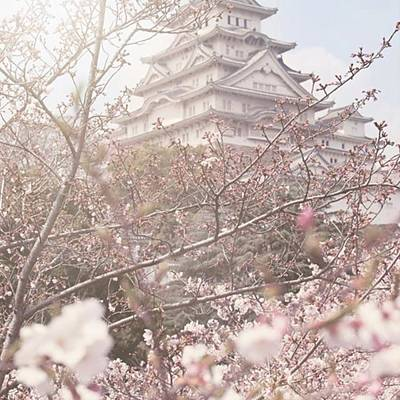 Florals Wall Art - Photograph - Himeji Castle At Cherry Blossom by Margaret Goodwin