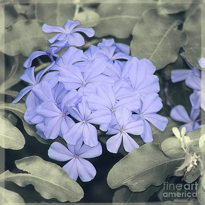 Photograph - Hint Of Blue Floral Art Photography by Ella Kaye Dickey