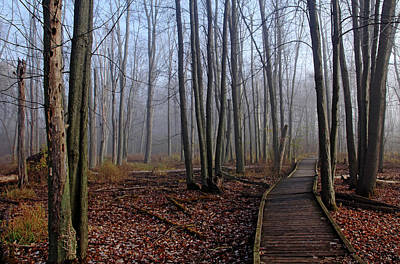 Photograph - Hint Of Fog In Fall by Debbie Oppermann