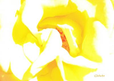 Photograph - A Touch Of Yellow by Jean Clarke