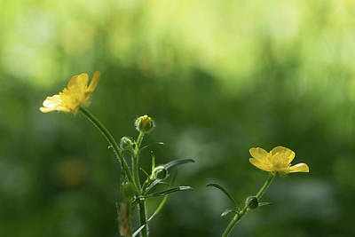 Photograph - Hints Of Yellow by Keith Boone