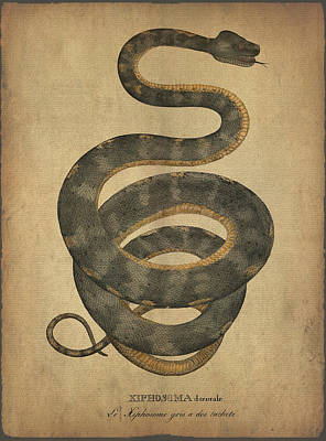 Boa Constrictor Drawing - Hiphosoma Dorsuale by Sergey Lukashin