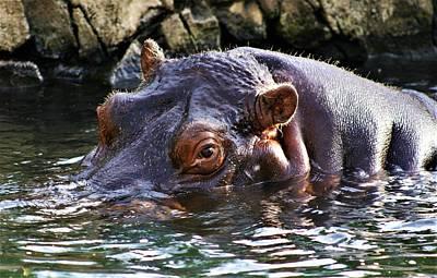 Hippo 3779_2 Art Print