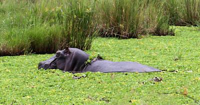 Kenya Digital Art - Hippo Beauty Bath by Nancy D Hall