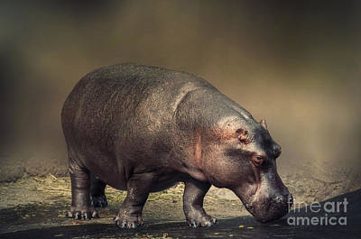 Art Print featuring the photograph Hippo by Charuhas Images