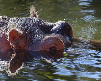 Photograph - Hippo Eye by Bruce J Robinson
