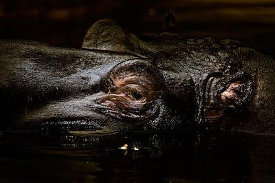 Art Print featuring the photograph Hippo by Joerg Lingnau