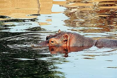 Hippo Scope Art Print by Jan Amiss Photography