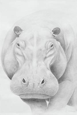 Hippopotamus Drawing - Hippopotamus by Andrea Angulo