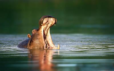 Hippopotamus Art Print by Johan Swanepoel