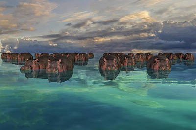 Surrealism Digital Art - Hippos by Betsy Knapp