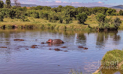 Photograph - Hippos Cooling Down by Cami Photo