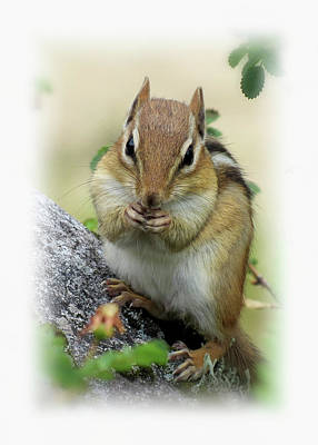Photograph - Hippy Chip - Chipmunk - Vertical by MTBobbins Photography