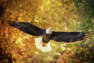 Photograph - Hiram In Autumn Bald Eagle Art by Jai Johnson