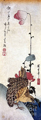 Photograph - Hiroshige: Poppies by Granger