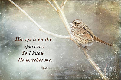 Photograph - His Eye Is On The Sparrow by Eleanor Abramson