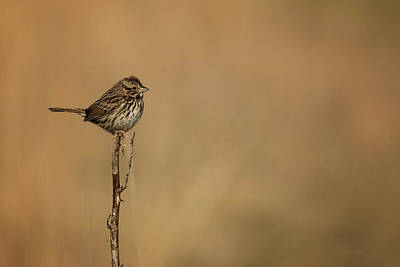 Photograph - His Eyes Are On The Sparrow by Linda Shannon Morgan