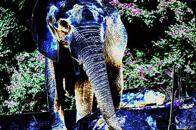 Photograph - His Majesty by Anand Swaroop Manchiraju