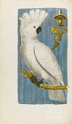 Histoire Des Oiseaux  Art Print