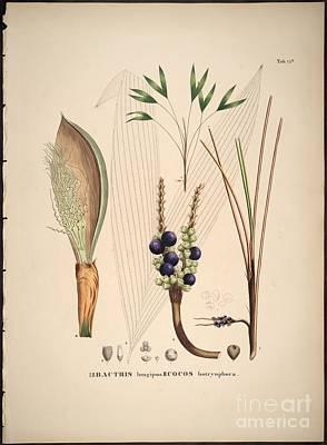 Volume Painting - Historia Naturalis Palmarum by MotionAge Designs