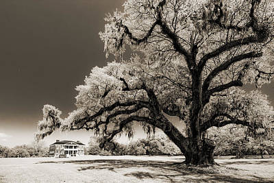 Live Oaks Digital Art - Historic Drayton Hall In Charleston South Carolina Live Oak Tree by Dustin K Ryan