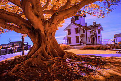 Photograph - Historic Fermin Point Lighthouse In Infrared by Randall Nyhof