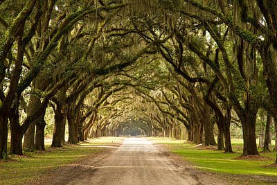 Photograph - Historic Live Oak Trees by Lamarre Labadie
