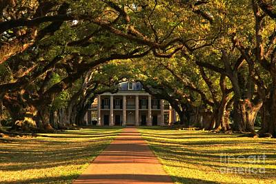 Photograph - Historic Oak Pathway by Adam Jewell