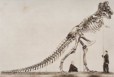 Oversized Drawing - Historical Illustration Of Dinosaur by Vintage Design Pics