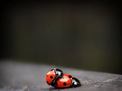 Realistic Photograph - Hitching A Ride by Martin Newman
