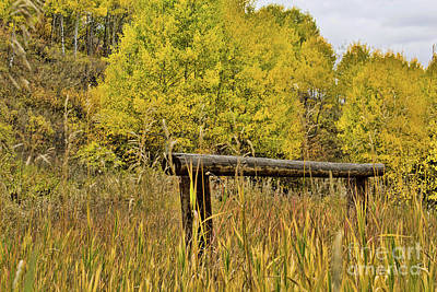Photograph - Hitching Post by Steven Parker